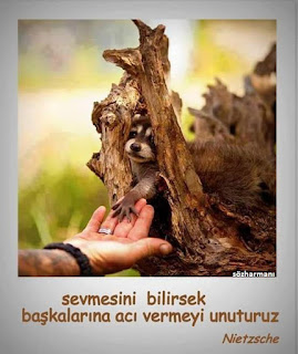 acı, ayı, ayı yavrusu, bilmek, içten, insan, malak, nazik, nietzsche sözleri, ölüm, sabırlı, samimi, sevmek, sevmesini bilmek, sözharmanı,
