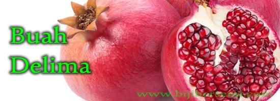 buah delima, buah pome, cara menanam buah delima