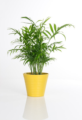 Indoor Plants - How to Indoor Plant Care: Indoor House ... on names of exotic plants, low maintenance indoor plants, names of shade loving plants, names of iris plants, names of ground cover plants, names of orange plants, products we get from plants, names of florida palms, names of succulent plants, names of ornamental plants, names of climbers, names of perennial plants, names of wood plants, names of tropical plants, names of water plants, names of desert plants, names of landscape plants, names of all types of plants catalog, names of flowering plants, names of indoor plants,