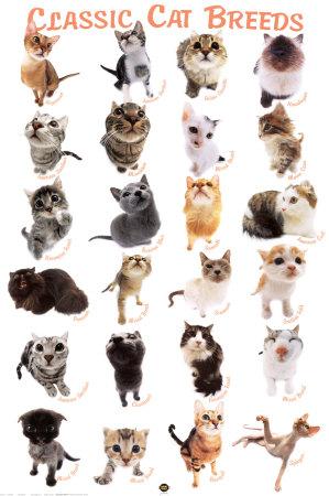 Domestic Cat Species List