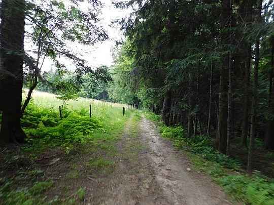 Skraj łąki przy Czarnym Lesie.
