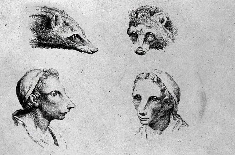 10-Badger-Animal-Transformations-Drawings-from-the-1600s-www-designstack-co