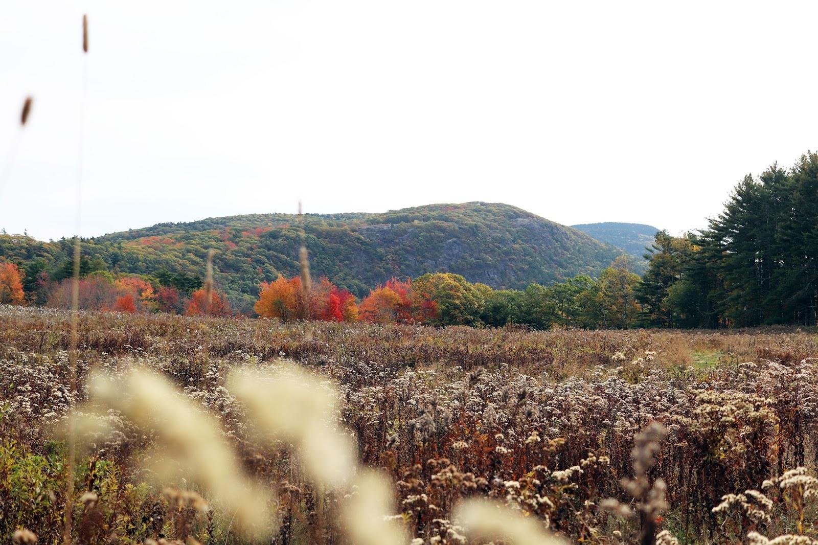 fernald's neck preserve, lincolnville maine, camden maine