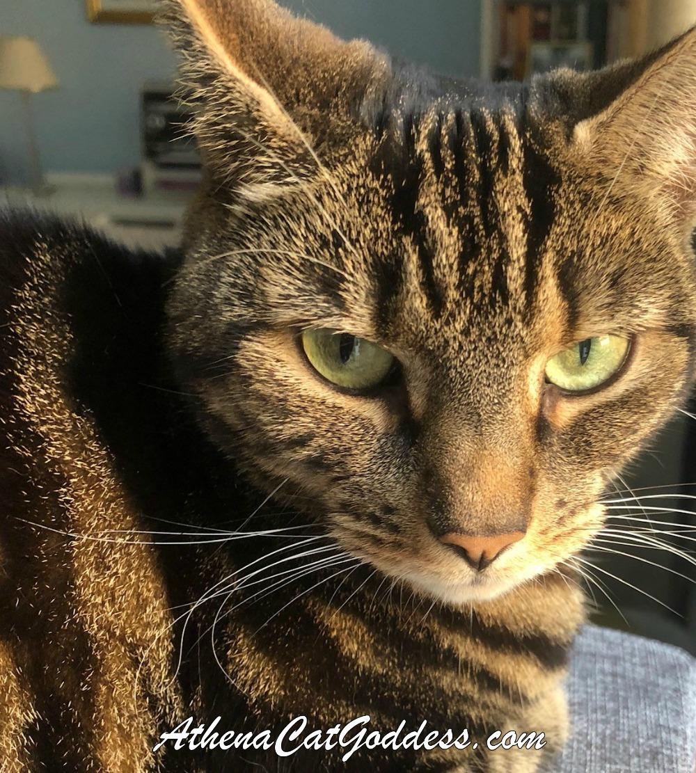 Athena Cat Goddess Wise Kitty: Friendly Fill-Ins, Sunday ...