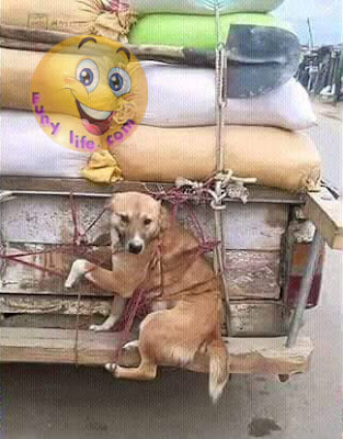 Dog Funny Truck