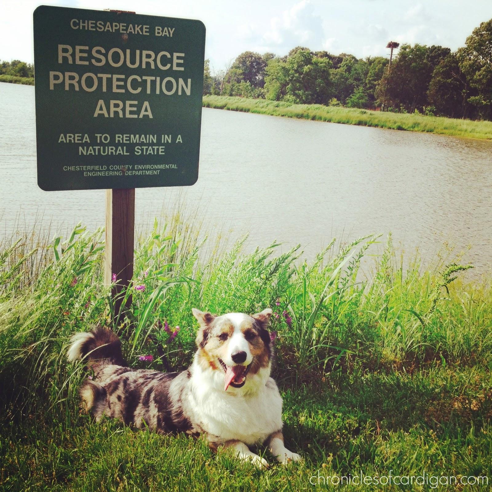 Natural Protection Dog Food