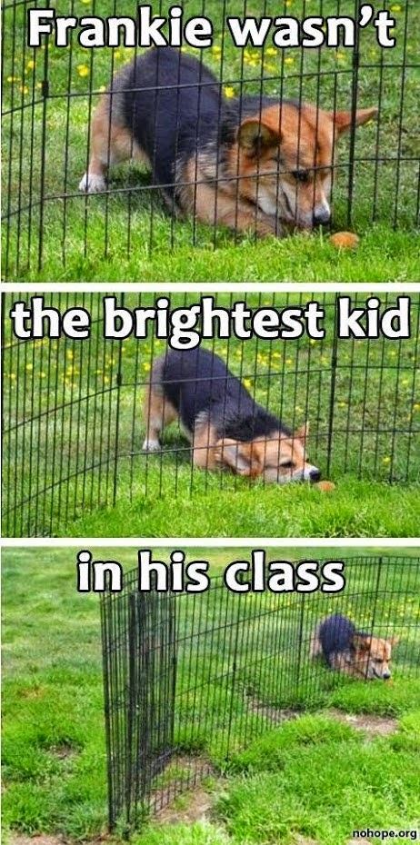Funny Stupid Dog - Frankie wasn't the brightest kid in the class