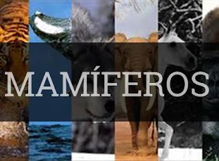 mamíferos resumo exemplos classificação reprodução habitat