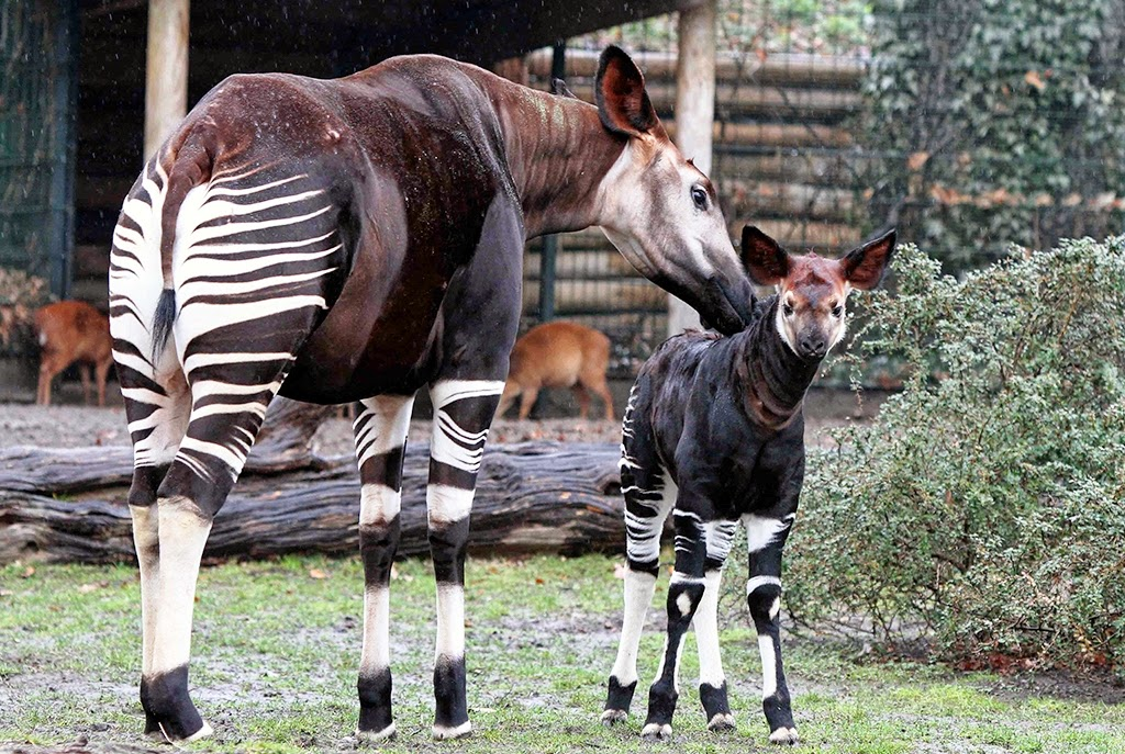 Jardim Zoológico de Berlim | Alemanha