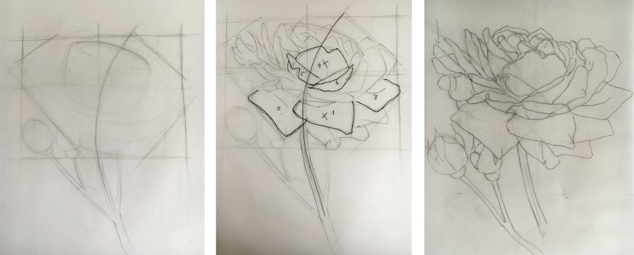 Three stage drawing process for a rose