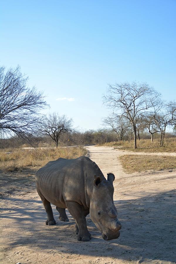 vor einer wunderbaren Kulisse, Wildnis Afrikas