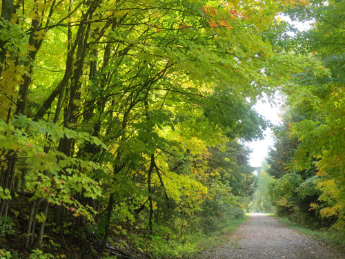 rail trail with sunny leaves