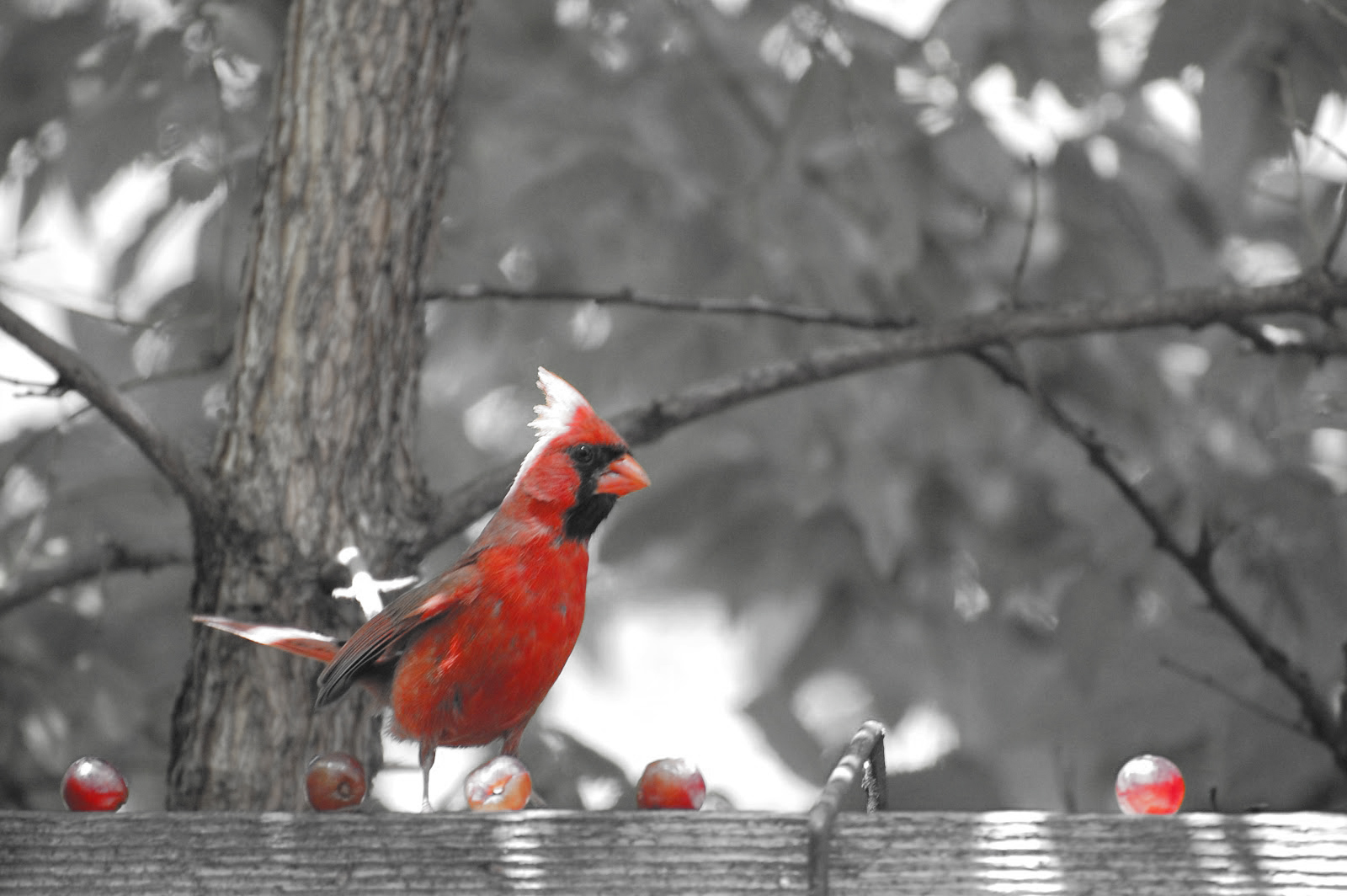 Appreciating Cardinals