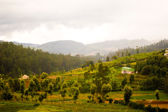 Nilgiri Hills, Tamilnadu