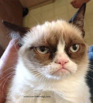 Agresif-Kedi