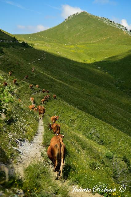 Alpage du Charmant Som en Isère, Chartreuse
