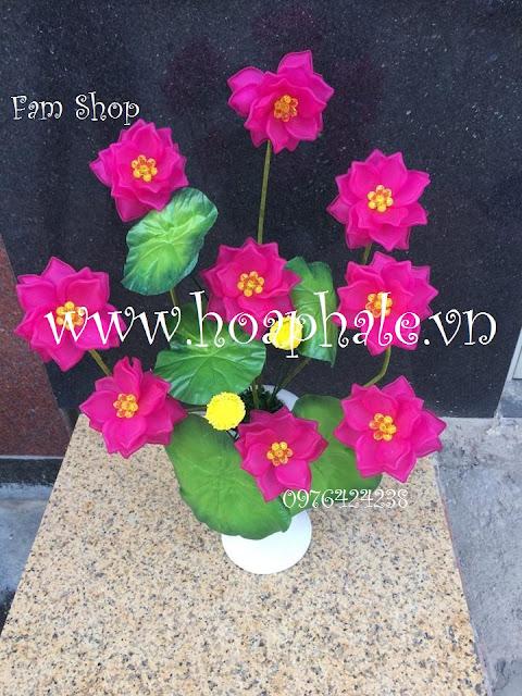 Hoa da pha le o Thanh Cong