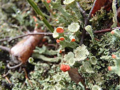 grzyby 2017, grzyby wiosenne, grzyby w kwietniu, grzyby w Sudetach