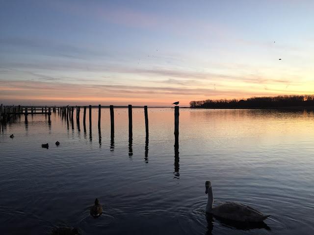 Sonnenuntergang am Haff mit Schwan
