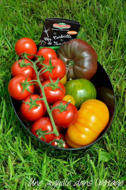 ma corbeille de tomates Prince de Bretagne