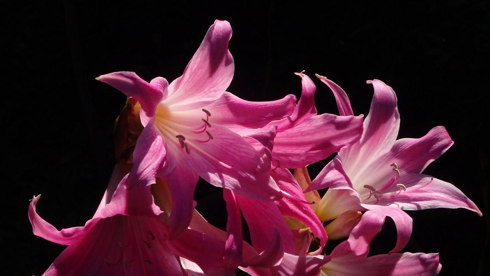Melbourne Fresh Daily AUTUMN FLOWERS