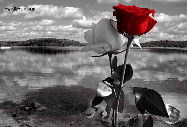 love hd wallpaper, beautiful love flowers photos, images of love for free download