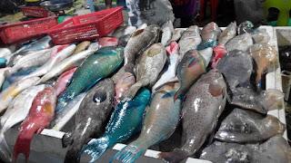 hasil laut sabah,udang besar,lobster sabah,lobster, Tanjung Aru