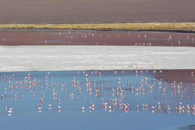Laguna Colorada, na Bolívia