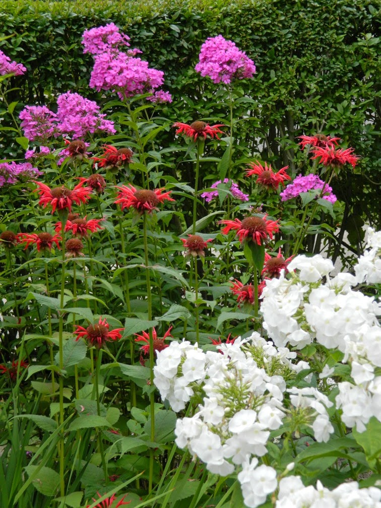 Summer phlox paniculata Monarda beebalm by garden muses-not another Toronto gardening blog