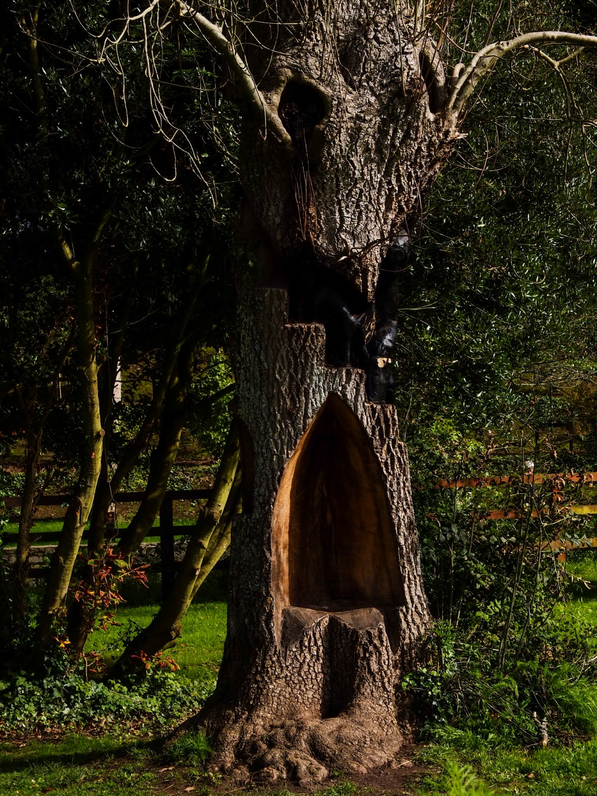 A hollow in a tree on Cahir Castle grounds in Co.Tipperary.