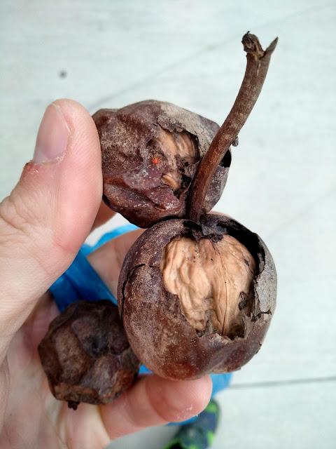 Грецкие орехи Сукко