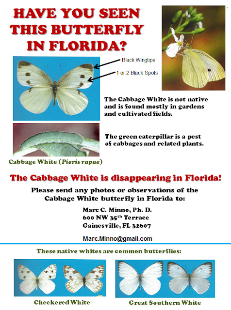 Have you seen the Cabbage White in Florida?