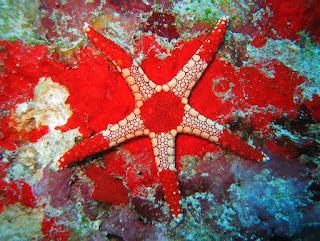 http://www.allfiveoceans.com/2016/09/10-most-bizarre-and-beautiful-starfish.html
