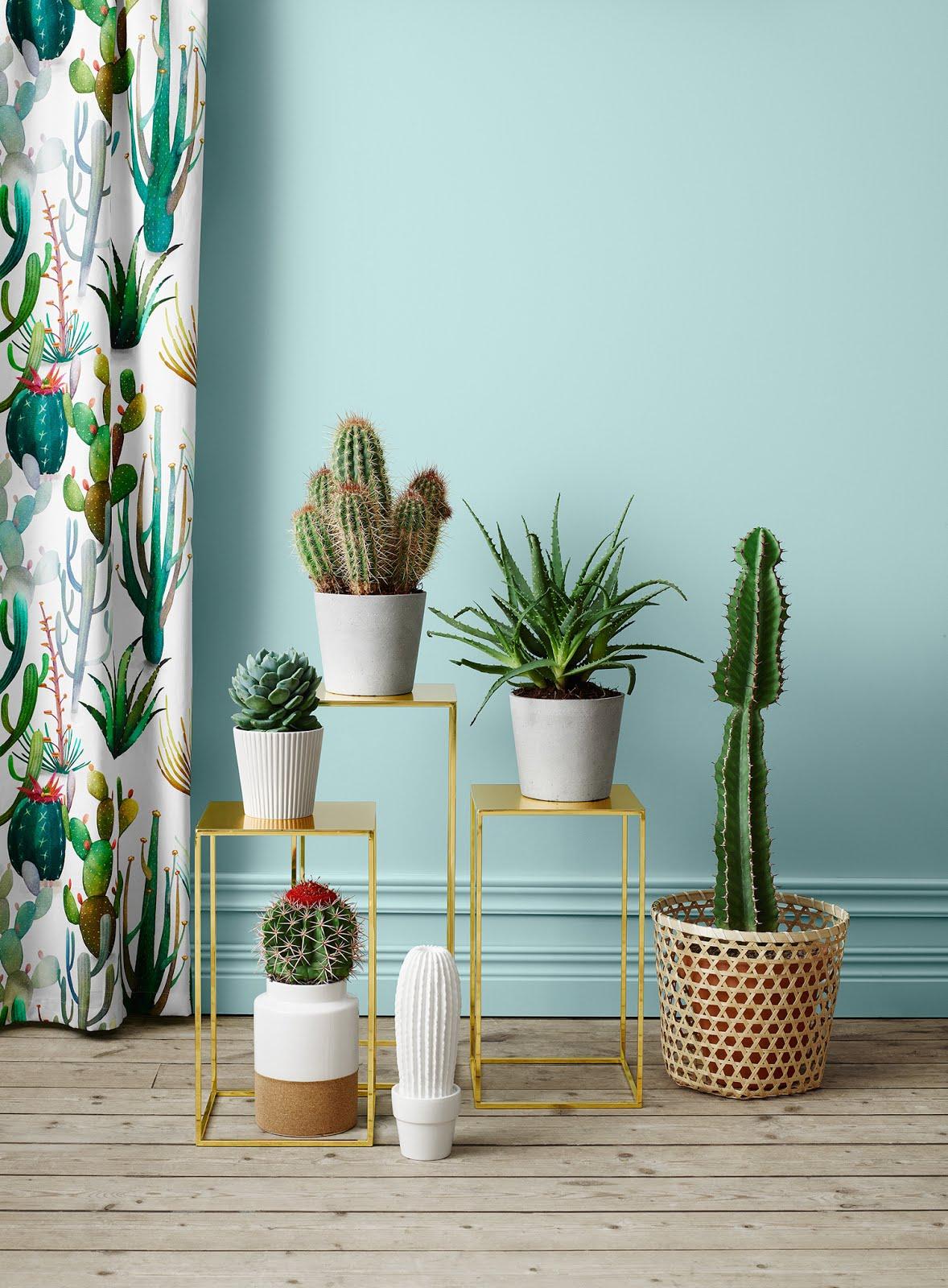 Tendenze arredo 2017 piante in casa 1 cactus mania for Piante in casa