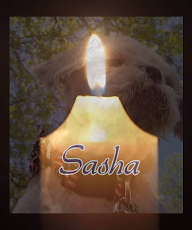 In Memory of Sasha...