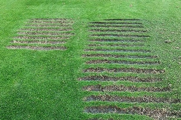 driving range divots made by LPGA golfer Sung Hyun Park