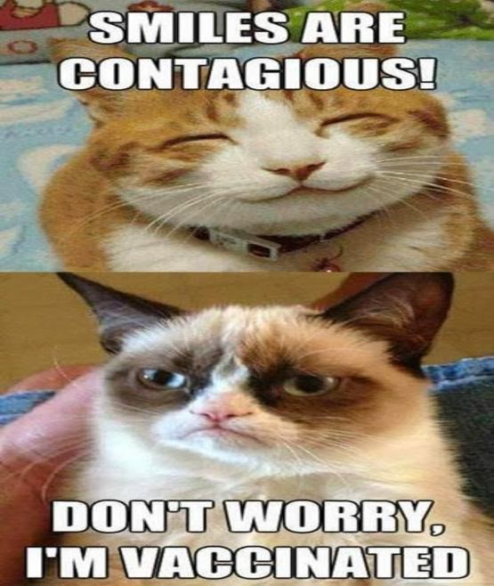 Titanic Grumpy Cat Quotes Google Quotesgram