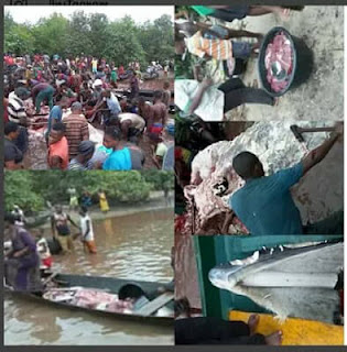 Giant Whale Butchered in Akassa, Bayelsa State