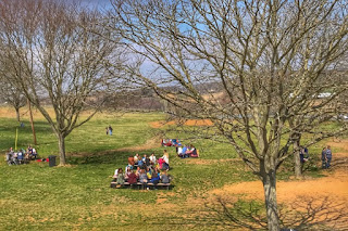 Spring picnic at a winery