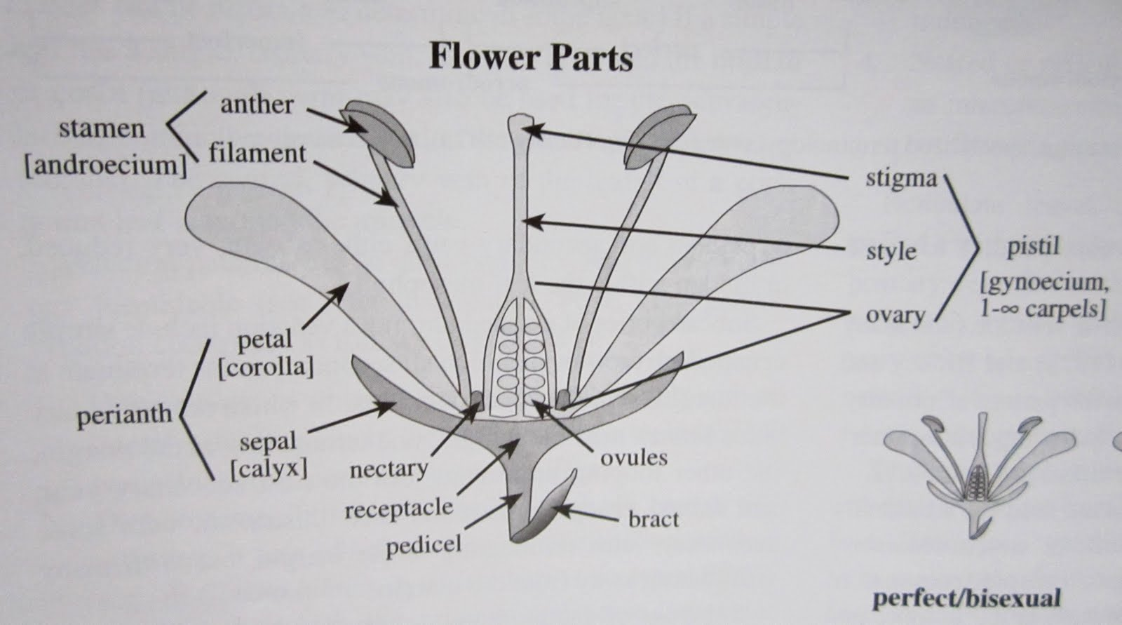 labelled diagram of pride barbados flower typical ansul system wiring inky leaves january 2012