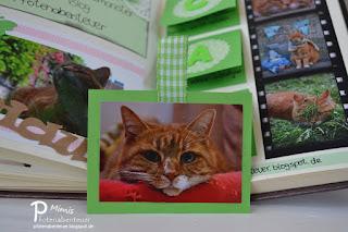 Beidseitiger Tag mit Katzenfotos von Mieze Mimi
