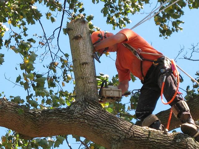 Tree-trimming-service