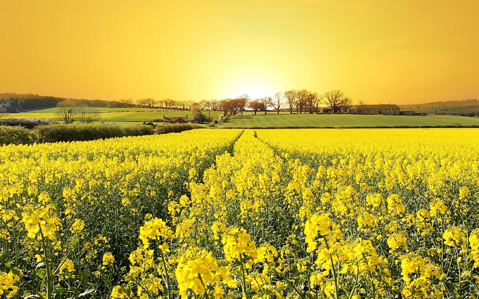 lente achtergronden hd - photo #21