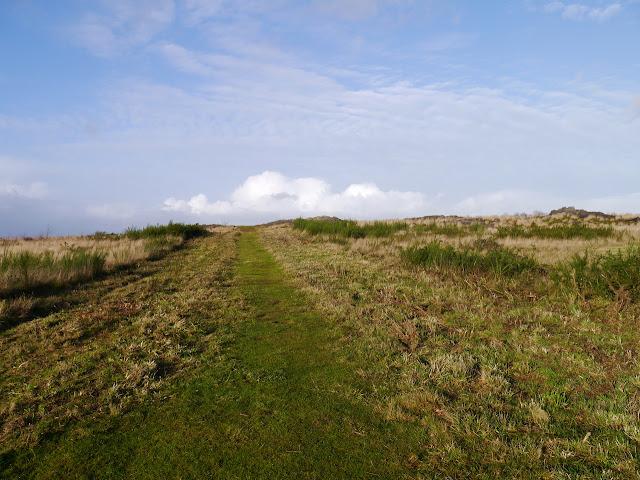 Les Mégalithes de saint-Just 35 ille et Vilaine dans les landes de Cojoux. ici,  près des  Alignements du Moulin