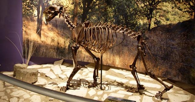 Museo Paleontológica Guadalajara exhibición