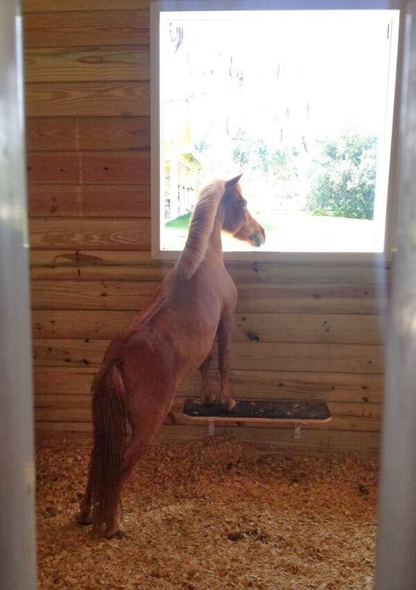 Funny animals of the week - 14 February 2014 (40 pics), baby horse picture