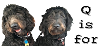 Goldendoodles: Questions {FAQ}
