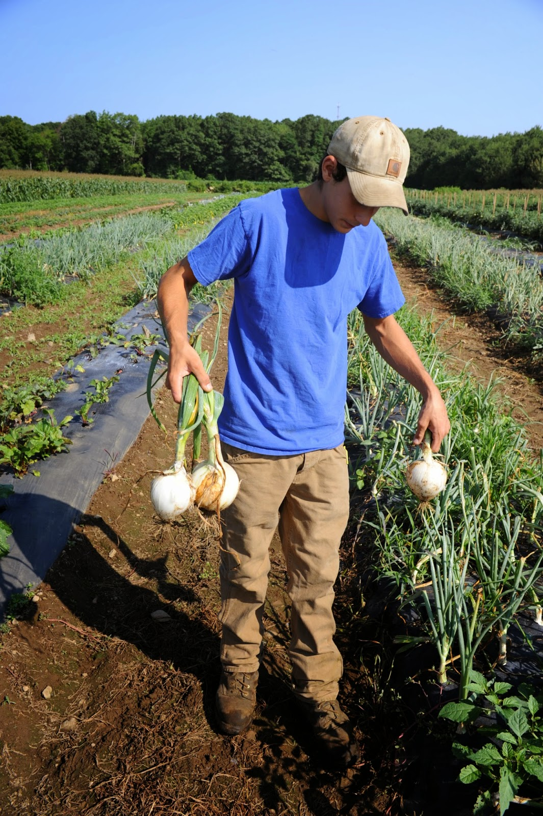 Introducing The Public To Farmers Of Rhode Island Will Provide Insights Into Complex