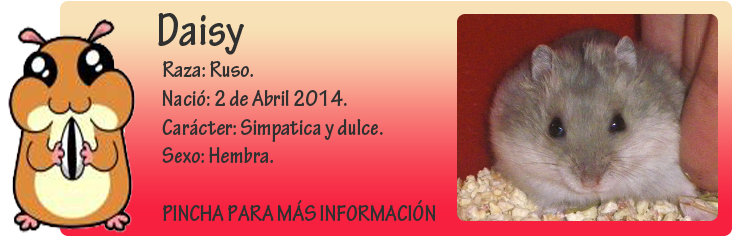 http://almaexoticos.blogspot.com.es/2014/05/daisy-hamstercita-hermosa-en-adopcion.html