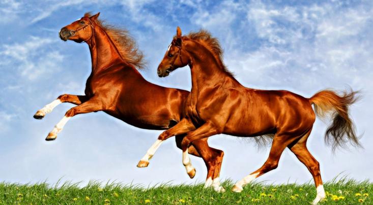 कार्य की पूर्ति हेतु लाल घोड़े
